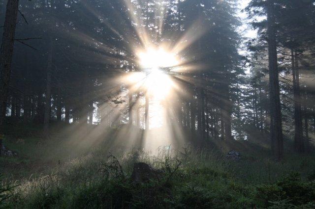 Lichtgestalt im Wald